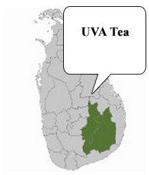 UVA tea
